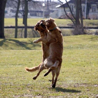 perros divertidos16