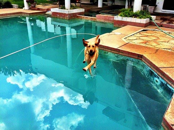 perros divertidos18