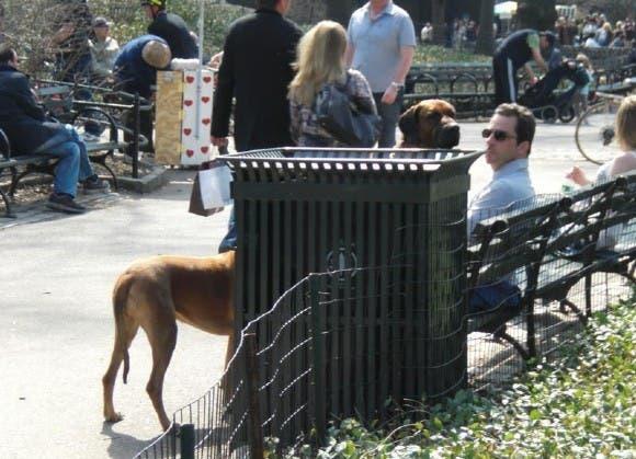 perros divertidos24