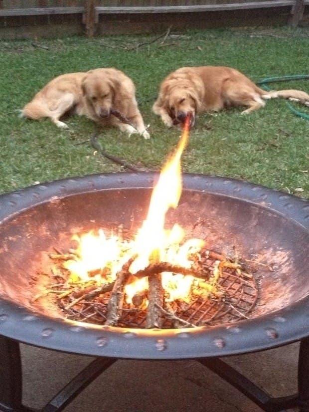 perros divertidos5