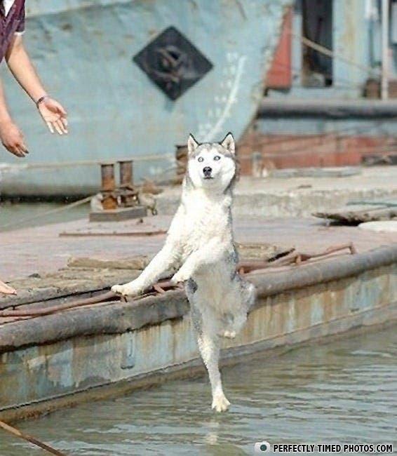 perros divertidos9