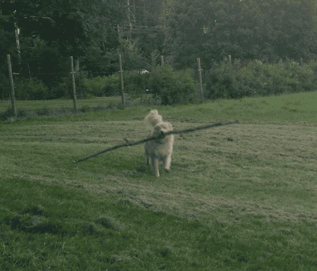 perros6