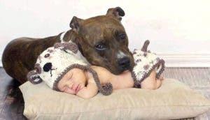 pitbull-con-bebe-durmiendo