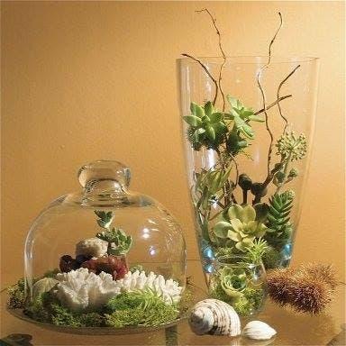 Terrarios 24 ideas para decorar tu hogar con el adorno - Ideas para el hogar ...