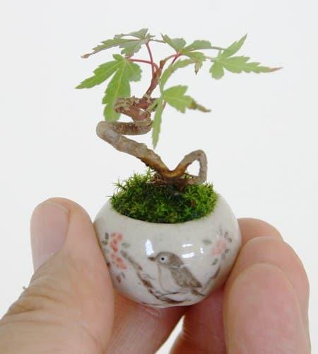 tiernos objetos pequeños27