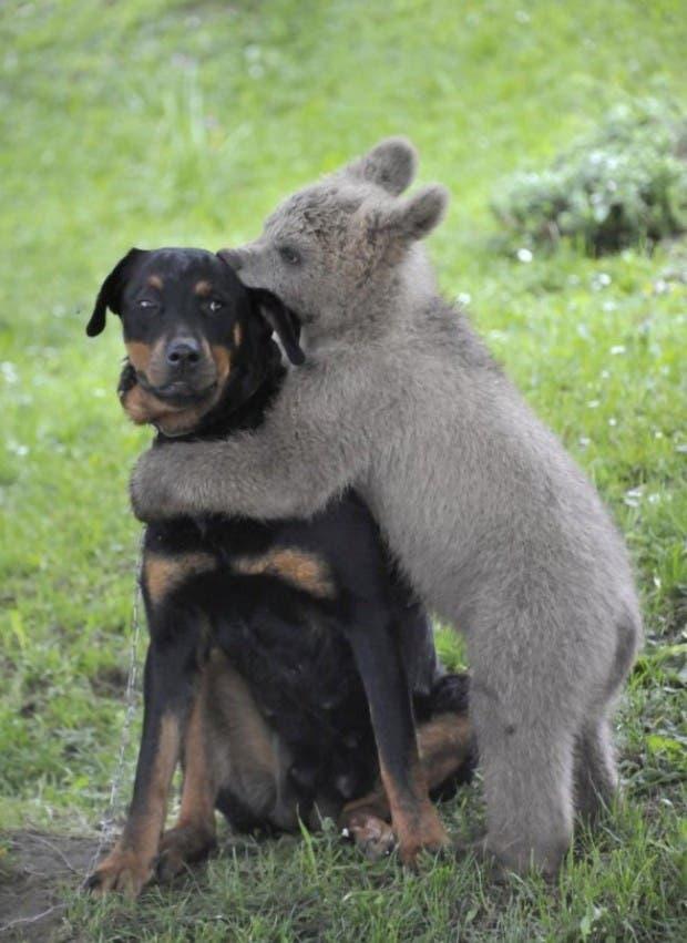 animales tiernos3