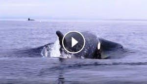 ballenas-de-cerca