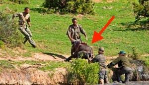 elefante-rescatado-sudafrica-guardabosques