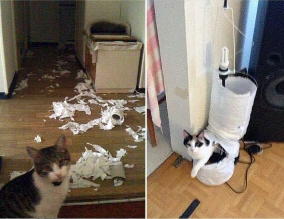 evil-cats