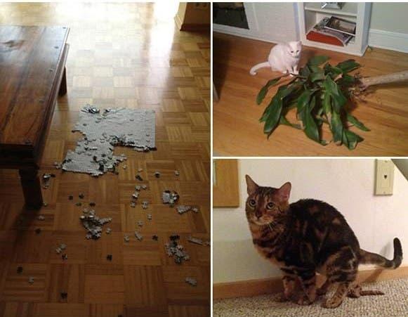 evil-cats2