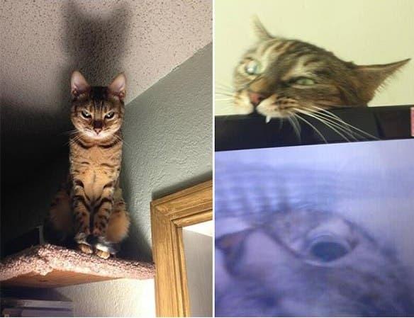evil-cats3