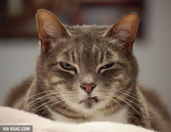 evil-cats6