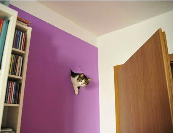 evil-cats7