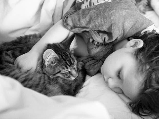 gato terapia12