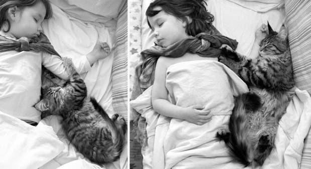gato terapia19