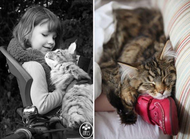 gato terapia21