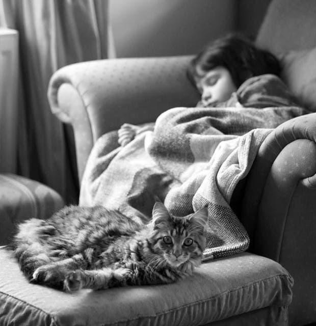 gato terapia22