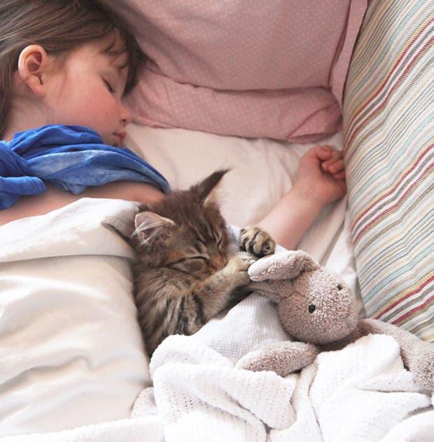 gato terapia3