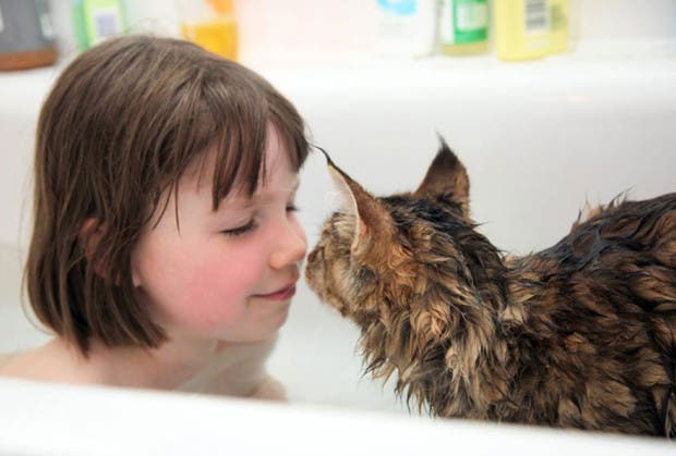 gato terapia4