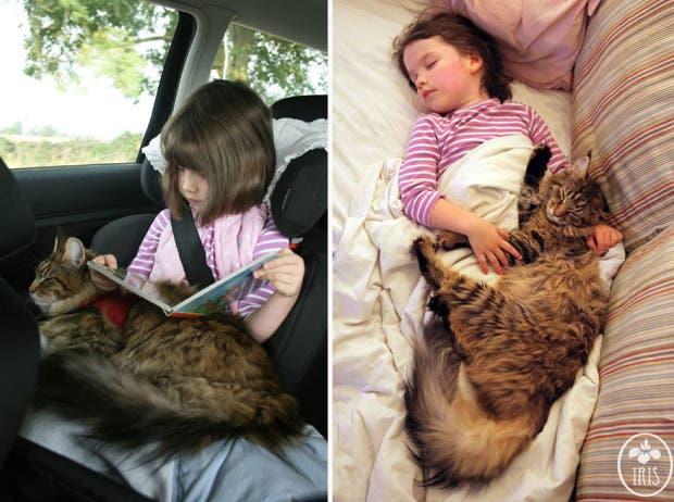 gato terapia5