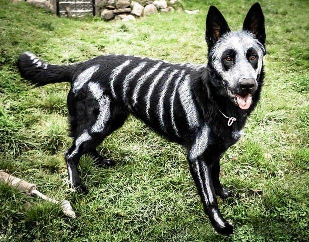 halloween mascotas1