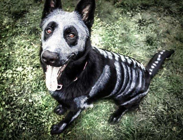 halloween mascotas2