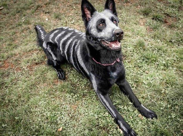 halloween mascotas3