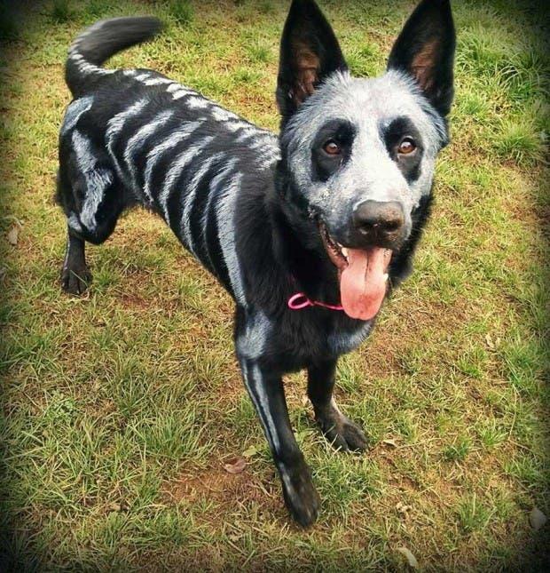 halloween mascotas5