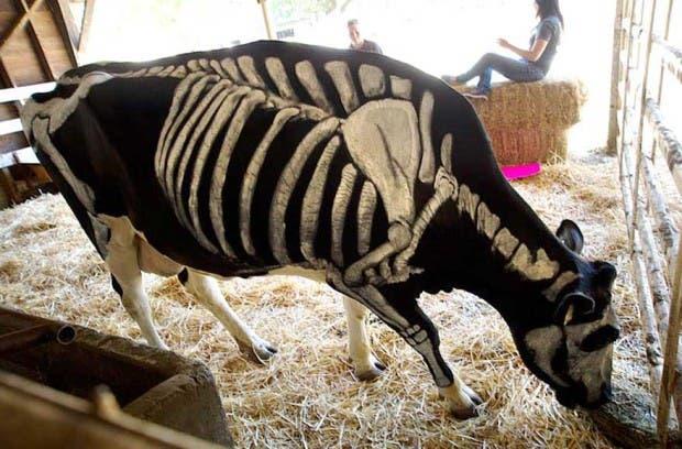 halloween mascotas8