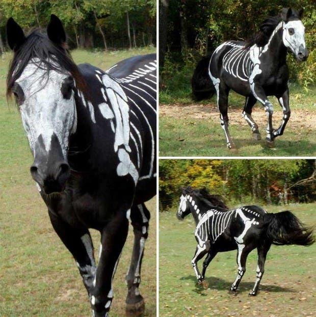 halloween mascotas9
