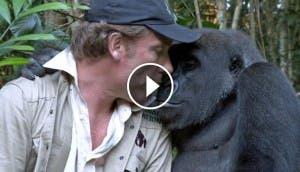 kwibi-gorila-play