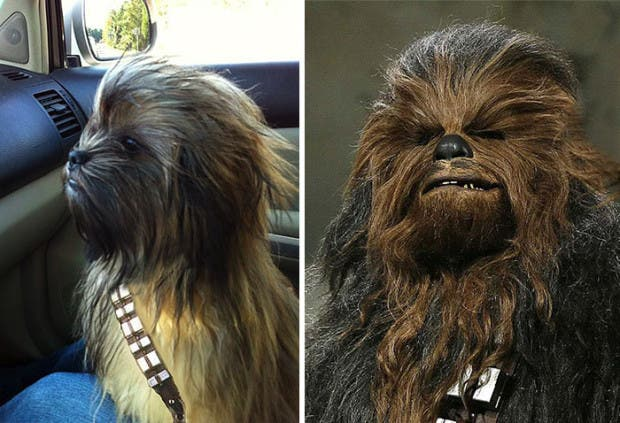 look alike2