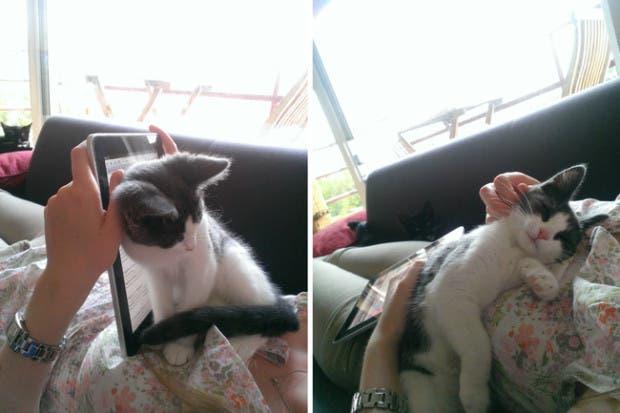 mascotas amor22