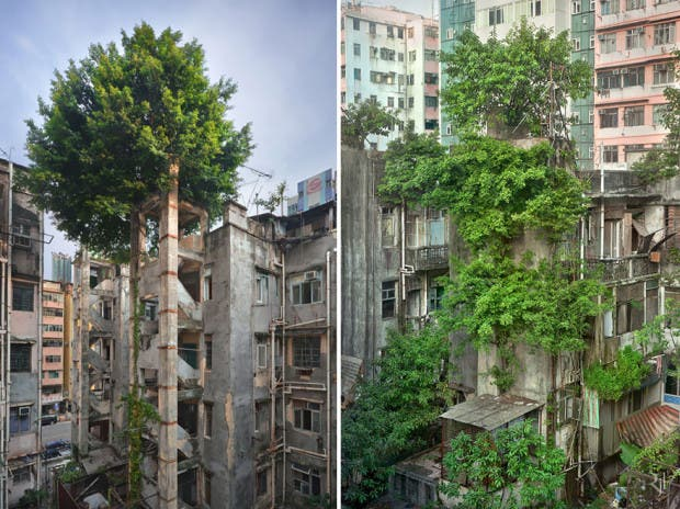 naturaleza vs civilizacion2