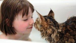 nina-gato-terapeutico