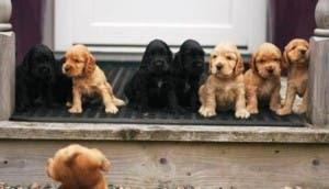 perritos-tiernos
