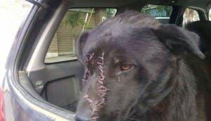 perro-chao-agredido