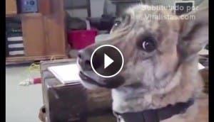 perro-hablando-play