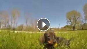 perros-alegria-jugando