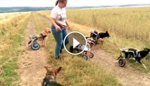 perros-discapacitados-juegan-play