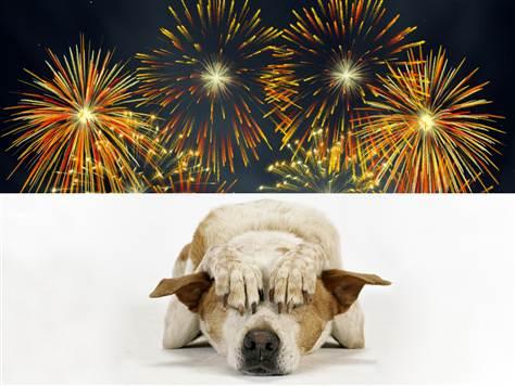 perros-miedo-fuegos-artificiales