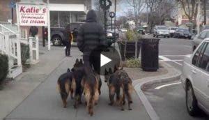 perros-sin-correa-play