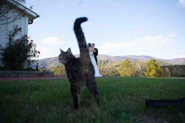 photobomb felino2