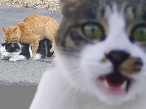 photobomb felino3