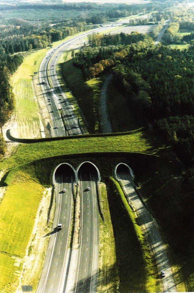 puentes34