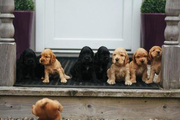vida de cachorritos19