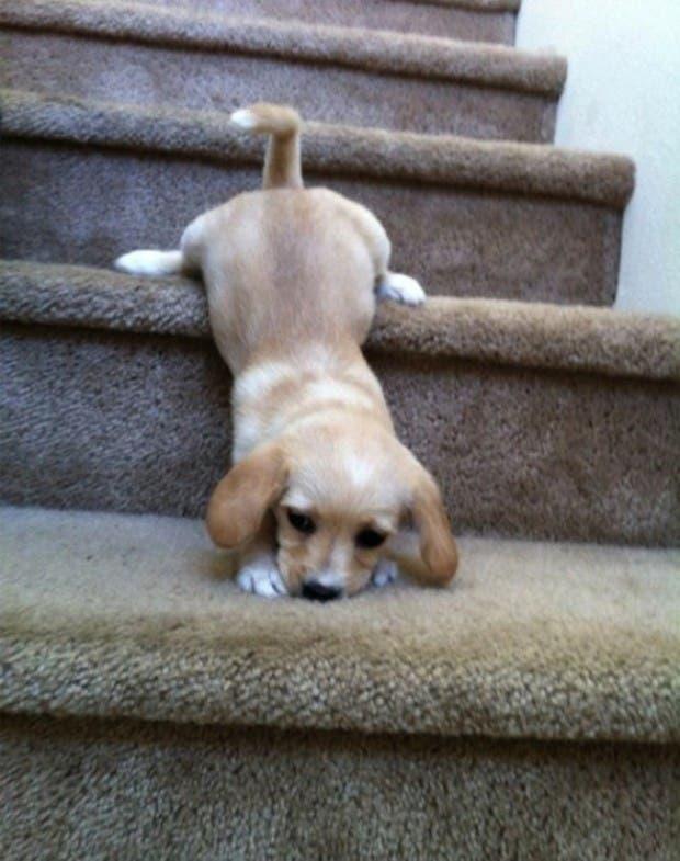 vida de cachorritos29