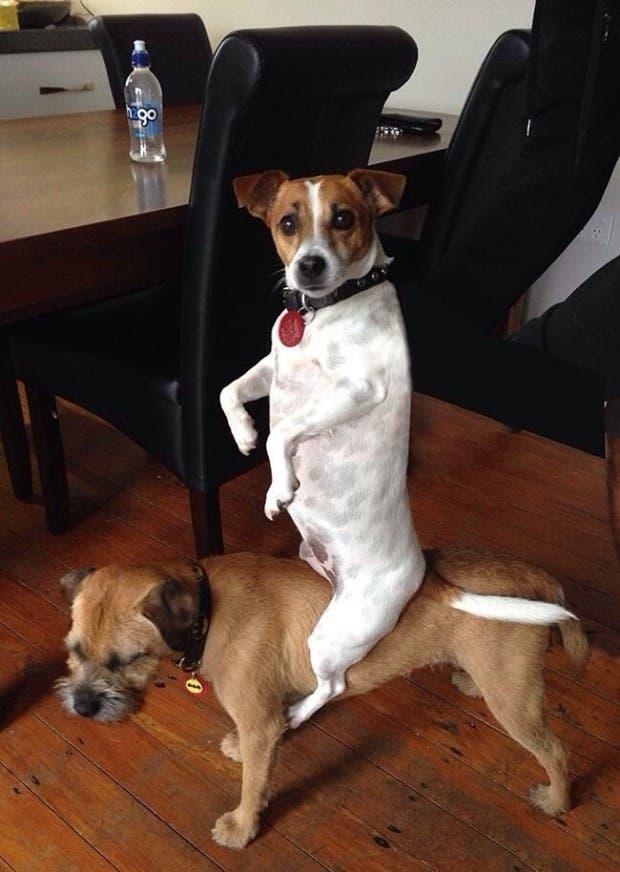 vida de cachorritos34