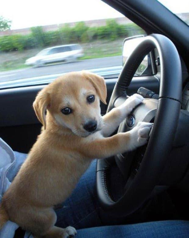 vida de cachorritos37