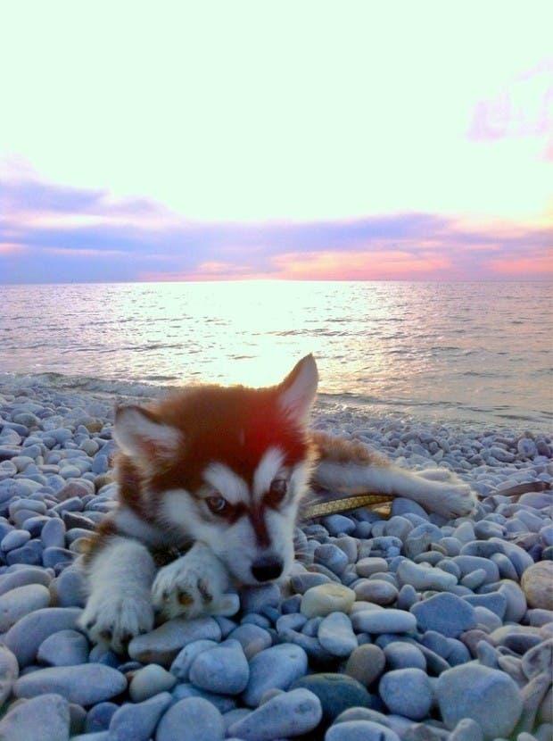 vida de cachorritos43